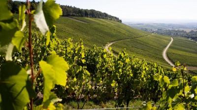 Blick auf einen Weinberg in Württemberg. (picture alliance/dpa | Tom Weller)