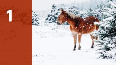 """Heute öffnet sich das 1. Türchen unseres Adventskalenders """"Jingle ohne Bells"""". (Deutschlandradio / Unsplash / Annie Spratt)"""