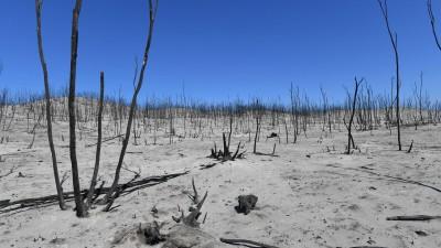 Verbrannte Landschaft im Flinders Chase National Park auf den Kangaroo Islands in Australien am 7. Januar 2020. (imago / David Mariuz)
