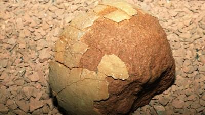 Ein versteinertes Dinosaurierei mit teilweise erhaltener Schale. Es gehört zur Sammlung des Berliner Naturkundemuseums, stammt aus der Oberkreide-Zeit und wurde in der mongolischen Wüste Gobi gefunden. (picture-alliance / Hubert Link)