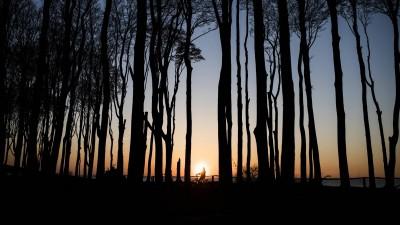 Die Sihouette einesRadfahrers im Gespensterwald in Nienhagen. Im Hintergrund geht die Sonne über der Ostsee unter. (Imago / Photothek / Florian Gärtner)