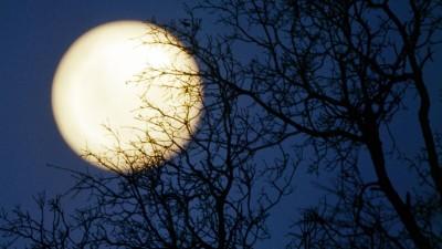 Hinter lichter Baumkulisse steht der Vollmond am Nachthimmel (imago / Harald Lange )