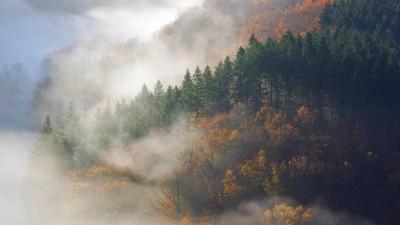 Herbstwald im Morgennebel am Tombeau du Geant, Belgien, Ardennen (Imago / blickwinkel)