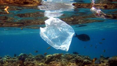 Eine Plastiktüte schwimmt über Korallen im Roten Meer in Ägypten. (picture alliance / epa / Mike Nelson)
