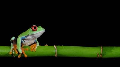 Ein bunter Frosch sitzt auf einem Bambusrohr. (imago images / Panthermedia)