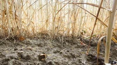 Sie sehen den trockenen Boden eines Weizenfeldes. (dpa)