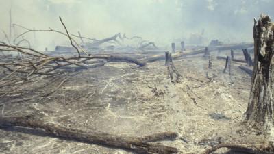 Tote Bäume liegen im grauen Brandnebel auf dem Boden. (Getty Images / LightRocket / Ricardo Funari)