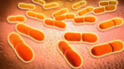 Mikroskopische Ansicht der Listeria monocytogenes. Listeria monocytogenes ist der Erreger der bakteriellen Infektion namens Listeriose. (imago / StockTrek Images)