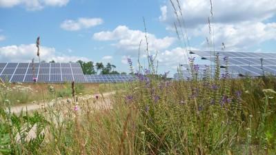 Eine Wildblumenwiese, im Hintegrund schräg aufgestellte, große Solarpaneele. (Ralf Hutter)