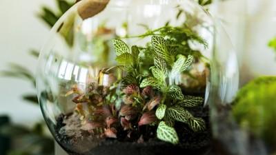 Ein Flaschengarten im Glas, ein kleines Biotop mit verschiedenen Pflanzen. (Getty Images/qnula)