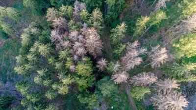 Waldsterben in Deutschland 19.08.2019, Oberursel (Hessen): Abgestorbene Fichten stehen im Wald nahe der Altenhöfe im Taunus. Durch die Dürre in diesem und dem vergangenen Sommer sowie den Borkenkäferbefall sind viele Fichten in Deutschland abgestorben. (Luftaufnahme mit einer Drohne), Oberursel Deutschland *** Forest dieback in Germany 19 08 2019, Oberursel Hessen Dead spruces are standing in the forest near the Altenhöfe im Taunus Due to the drought this and last summer and the bark beetle infestation, many spruces have died in Germany Aerial view with a drone, Oberursel Germany (imago / Jan Eifert)