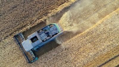 Brandenburg, Sieversdorf: Ein Landwirt erntet mit einem Mähdrescher Gerste (Luftaufnahme mit einer Drohne). (ZB/dpa/Patrick Pleul)