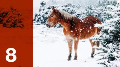 """Heute öffnet sich das 8. Türchen unseres Adventskalenders """"Jingle ohne Bells"""". (Deutschlandradio/ Unsplash/ Annie Spratt)"""