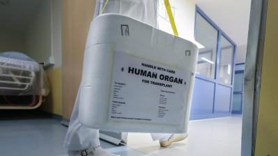 """Pfleger trägt eine Box mit der Aufschrift """"Human Organ"""" durch einen Krankenhausflur (imago stock&people / localpic)"""