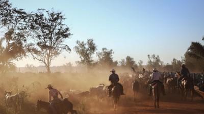 Eine Rinderherde mit Cowboys im Staub in Brasilien. (Getty Images / Mario Tama)