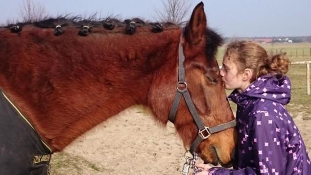 Wird von pferd genommen frau Hauspferd