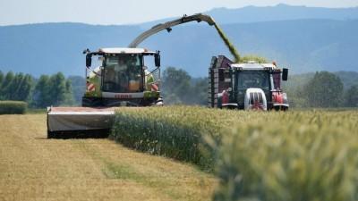 Feldhäcksler der Firma Claas häckselt Gerste für den Gebrauch in einer Biogasanlage. (imago images / Martin Wagner)