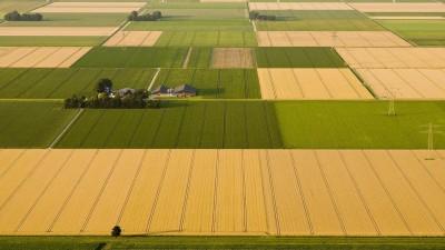 Luftaufnahme einer monotonen Feldlandschaft in Nordholland (picture alliance / Blickwinkel)